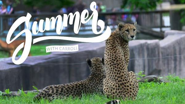Summer with Carroll   Milwaukee County Zoo